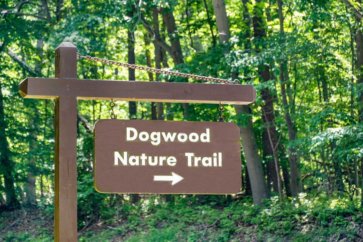 10 minutes to Dogwood Nature Trail at Greenbelt Park