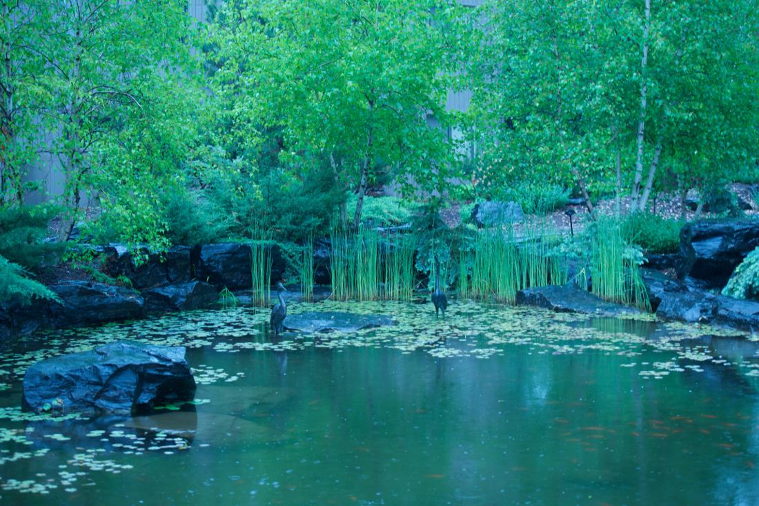 Stunning Natural Scenery at Cedars of Edina Apartments in Edina, MN