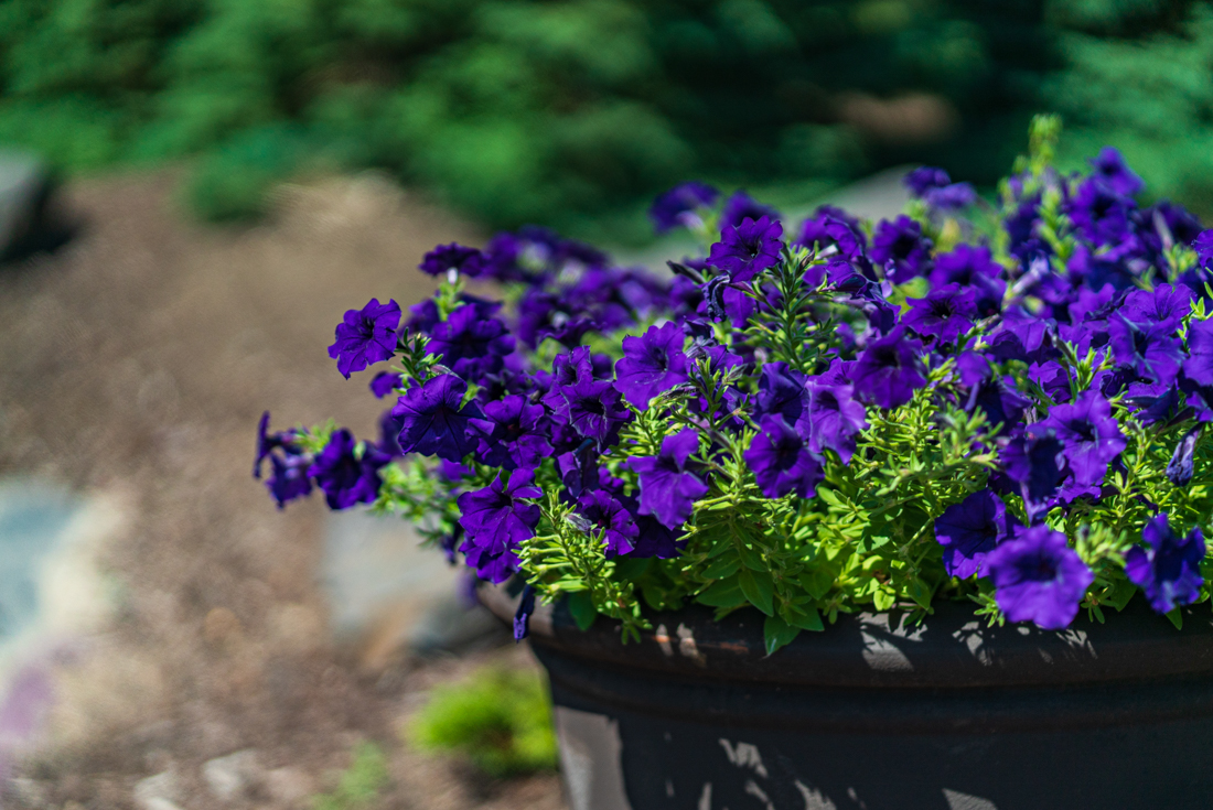 Beautiful fresh flowers at Cedars of Edina Apartments in Edina, MN