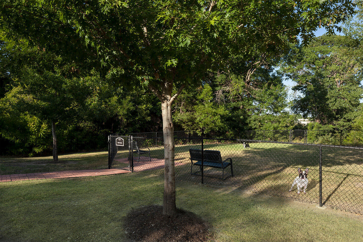 Pet-Friendly Apartments and Amenities at Champions Cove Apartments in Duncanville, TX