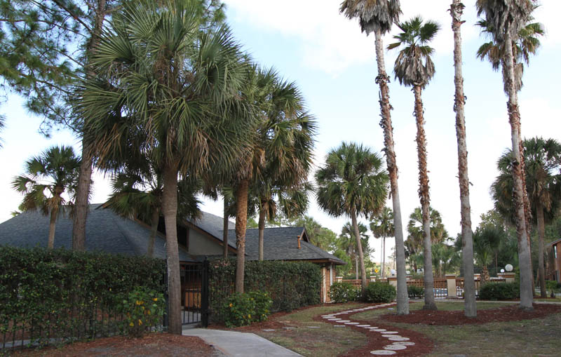 Towering Palm Trees at Cypress Trail Apartments in New Port Richey, FL