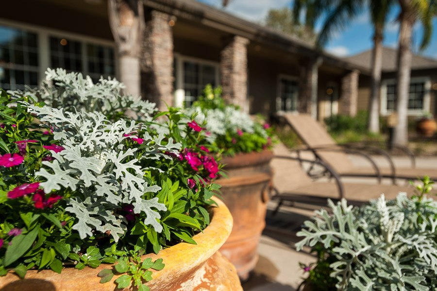 Lush Garden at The Enclave at Woodbridge Apartments in Sugar Land, TX