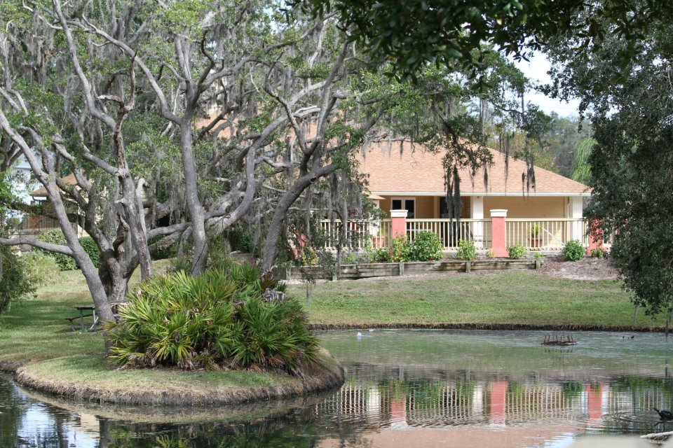 Pond with Cypress Tree at Harbor Oaks Apartments in Hudson, FL