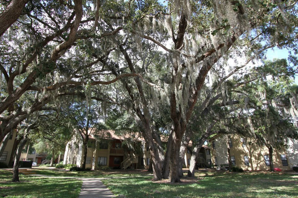 Majestic Crepe Myrtle Trees at Harbor Oaks Apartments in Hudson, FL
