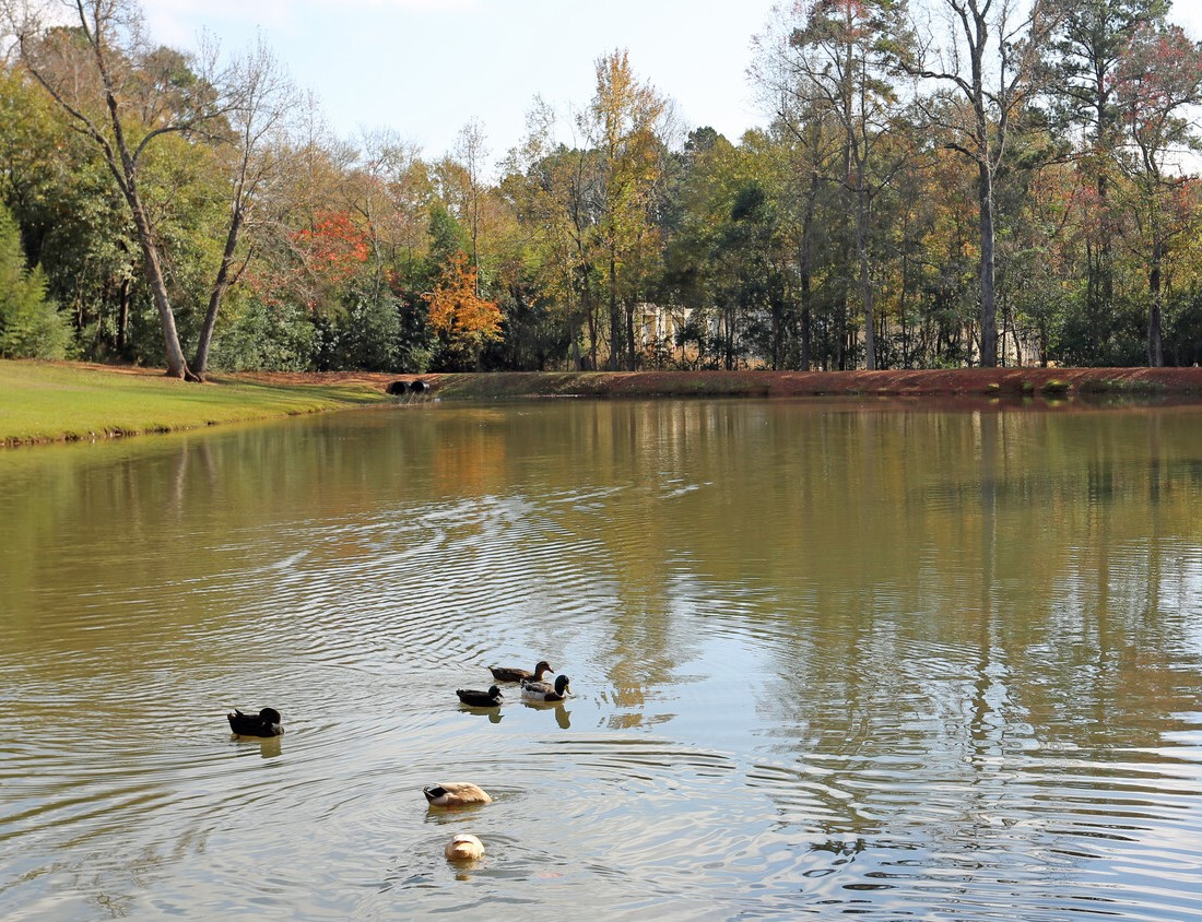 Duck Pond at North Star Apartment Homes in Nacogdoches, Texas