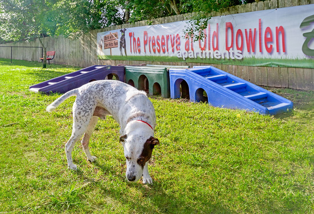 Pet-Friendly at Preserve at Old Dowlen Apartments in Beaumont, TX