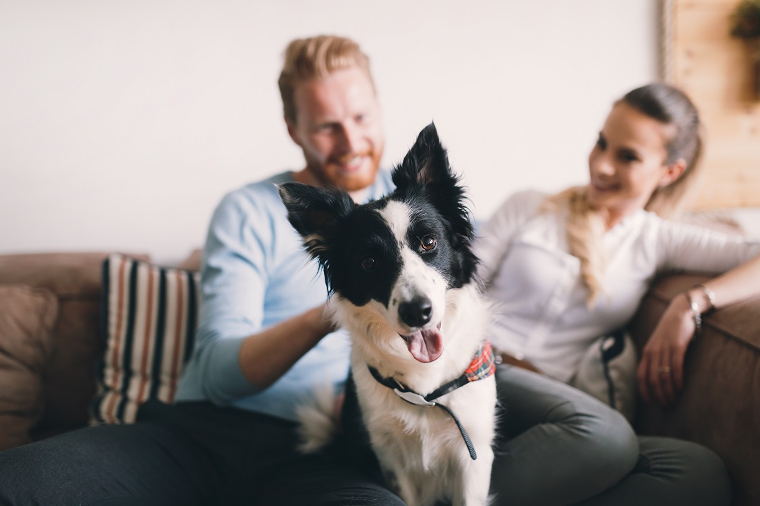 Pet-Friendly Apartments at Sawgrass Point in Gonzales, Louisiana
