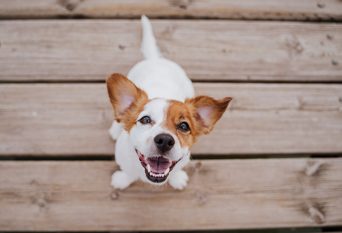 Pet Friendly Apartments at Sunscape Apartments in Abilene, TX