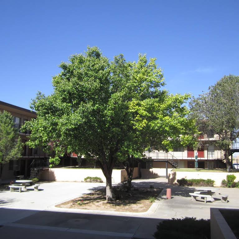 Picnic Area at The Villas @ Uptown Apartments in Albuquerque, NM