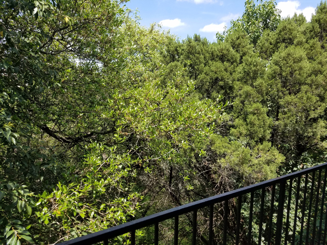 Lush Patio View at Waters at Barton Creek Apartments in Austin, TX