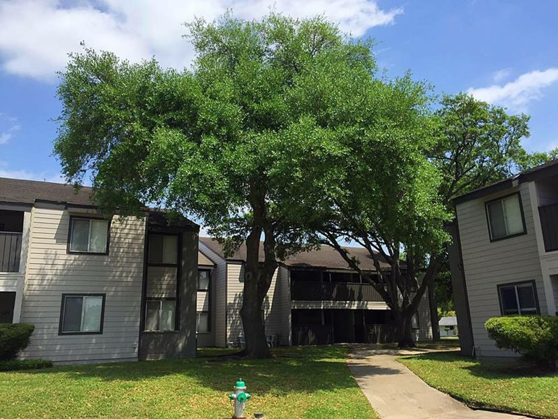 Lush Landscaping with Mature Trees at Windsor Park Apartments in Victoria, Texas